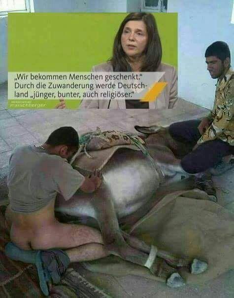 Bildergebnis für sodomie im islam